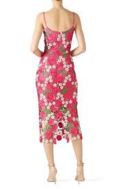 Alexa Lace Sheath by Dress The Population