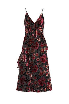 Dahlia Print Dress by Jill Jill Stuart