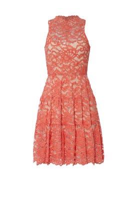 Posie Lace Dress by ERIN erin fetherston