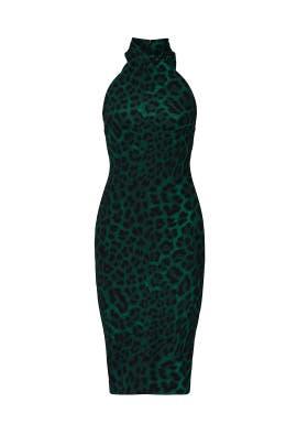 Jaguar Printed Harland Dress by Rachel Rachel Roy