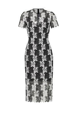 Black Print Lace Dress by Diane von Furstenberg
