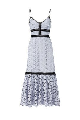 Blue Lace Elle Dress by Jill Jill Stuart