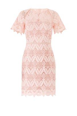 Laced Elora Dress by STYLESTALKER